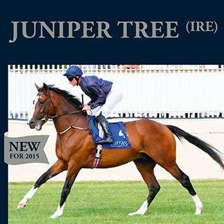 juniper content