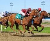 Dødt løb mellem to Adielsson-heste