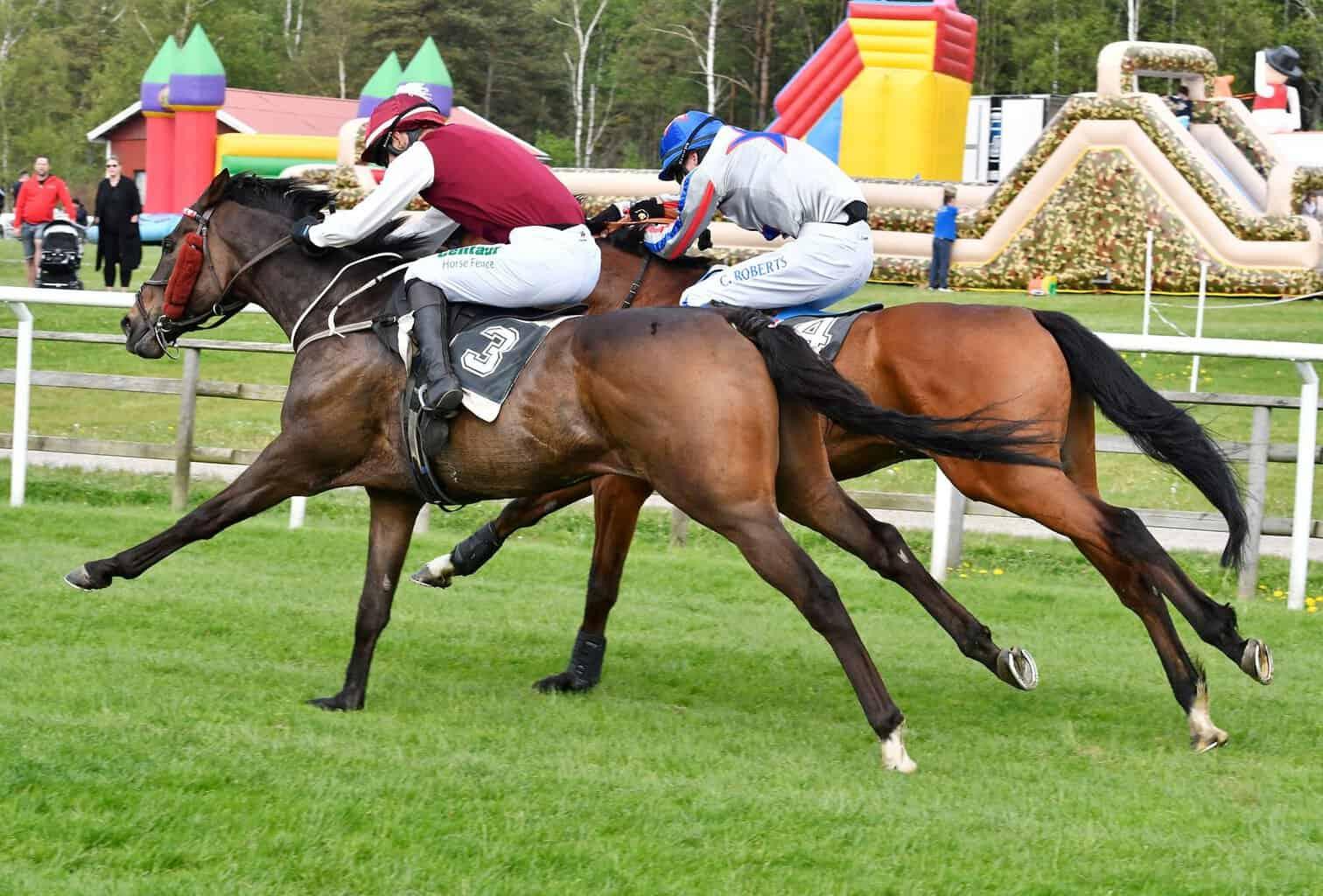 Lindenthaler og Calvados side om side på vej mod målstregen i H M Drottningens Pris. Foto: Stefan Olsson / Svensk Galopp.