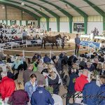 Ringen på York Stutteri under Scandinavian Open Yearling Sale i 2017. Foto: Burt Seeger.