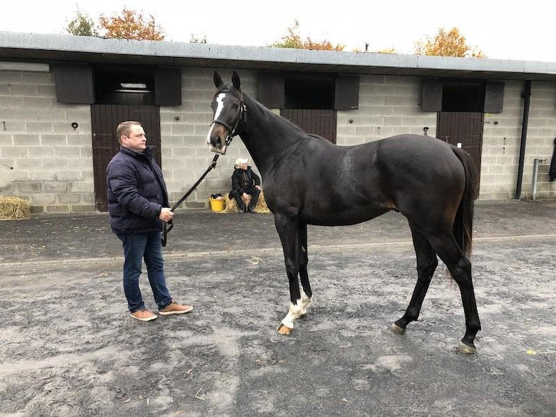 Bent Olsen betalte 4.000 euro i ringen for denne Cappella Sansevero-halvbror til én af Skandinaviens bedste 2-årige heste, Irish Trilogy. Foto: GalopSport.