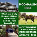 Moohaajim-content-banner-2019-v2.jpg