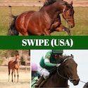 SWIPE-sidebar2019